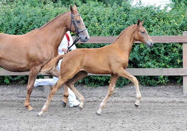 galopperende paarden
